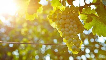 Weisswein - gut zu wissen